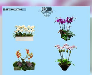 SEO for Orchid Arran